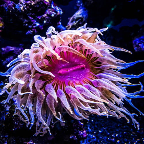Academy-Of-Science-Sea-Anemone