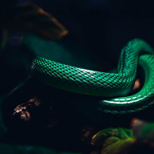 Academy-Of-Science-Snake