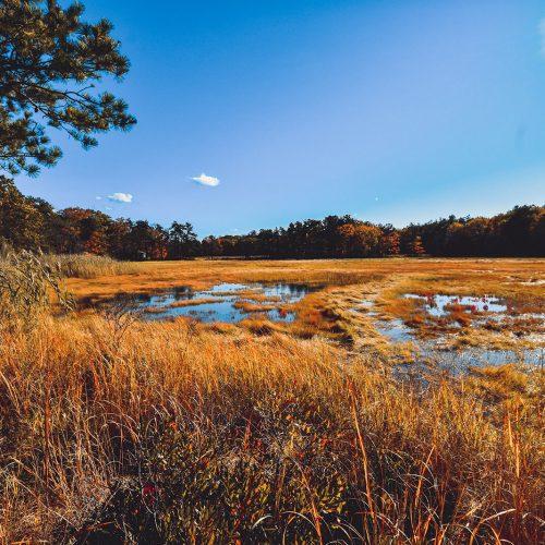 Atlantic-Way-Marsh
