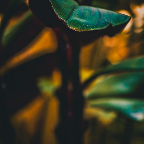 Conservatory-of-Flowers-Curious-Leaf