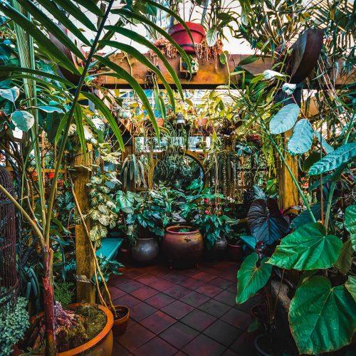 Conservatory-of-Flowers-Interior