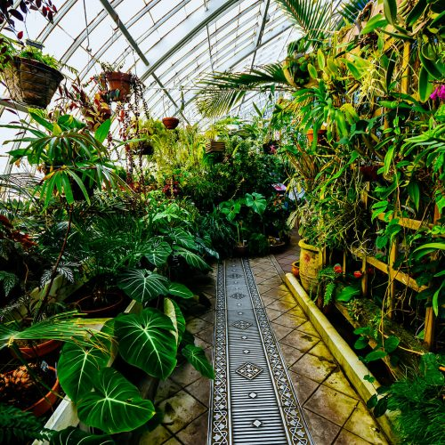 Conservatory-of-Flowers-Pathway