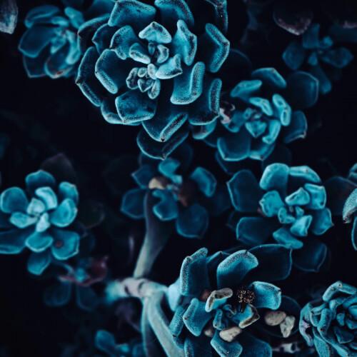 Des-Moines-Black-and-Blue