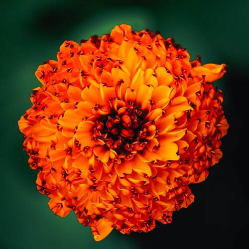 Des-Moines-Botanical-Garden-Lit