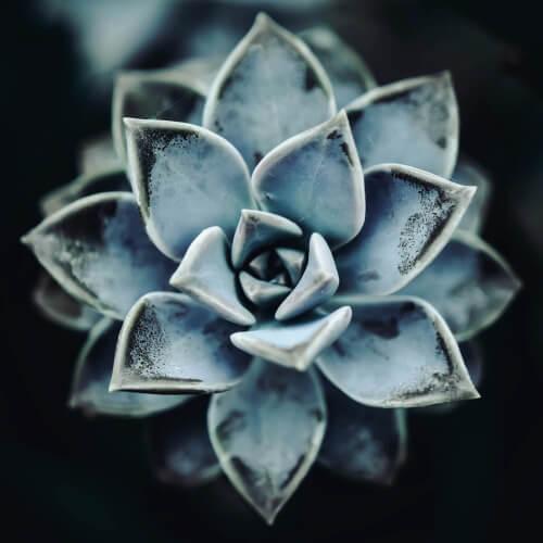 Des-Moines-Garden-Succulent