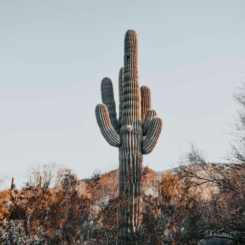 Desert-Botanical-Garden-Cactus