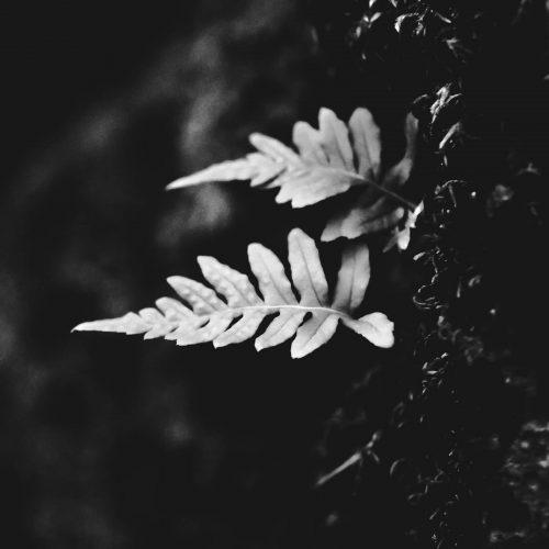 Faded-Leaf
