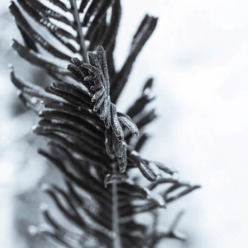 Great-Bay-National-Wildlife-Refuge-Leaf
