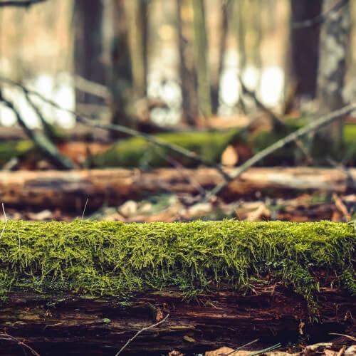 Great-Bay-National-Wildlife-Refuge-Log