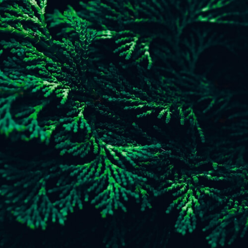 Green-Trees-Abstract