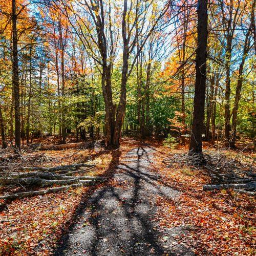 Lily-Pond-Park-Trail-2