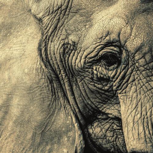 Rhode-Island-Elephant