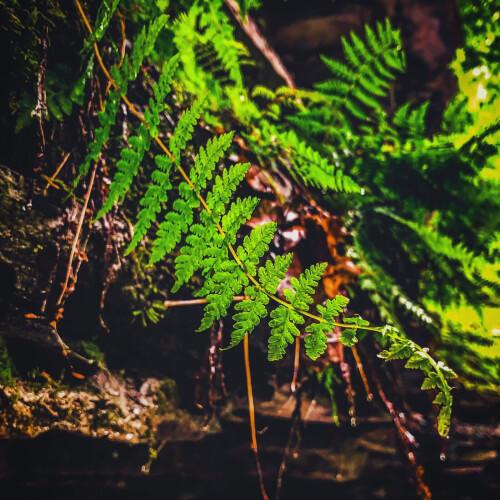 Stony-Brook-State-Park-Golden-Leaf