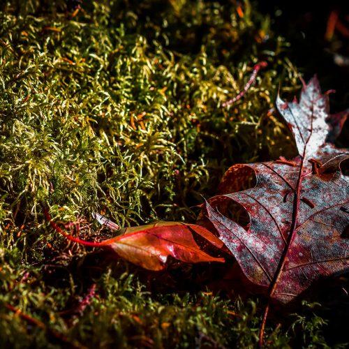 Taft-Point-Preserve-Leaf