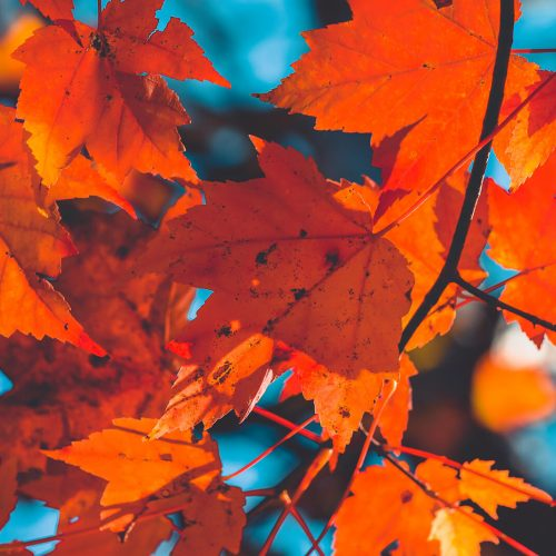 Taft-Point-Preserve-Leaves