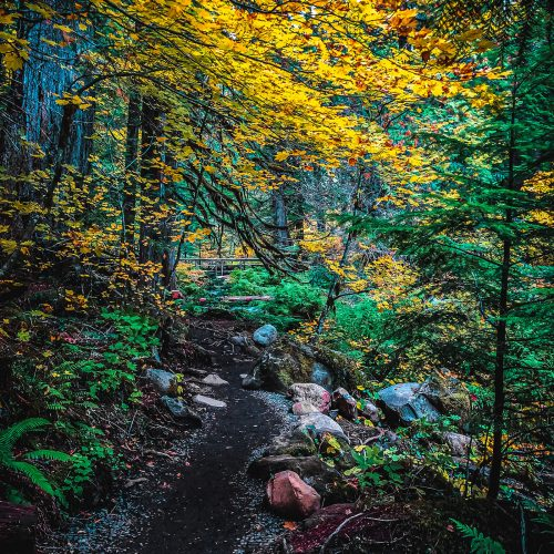 Tamolitch-Falls-Path