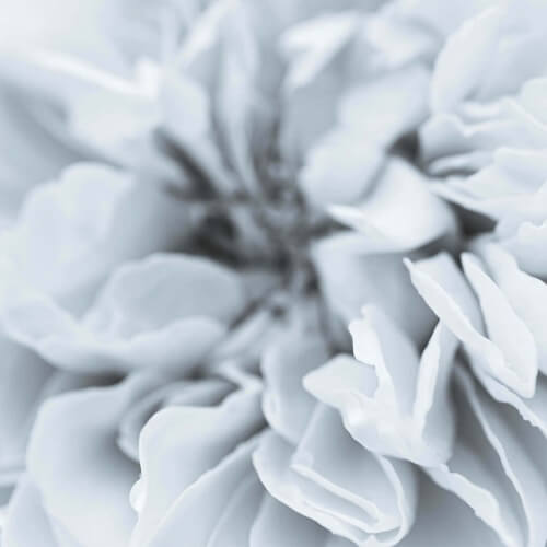 White-Flower-Abstract