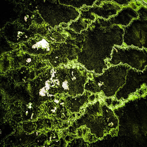 Yellowstone-Green-Abstract